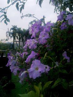 12 07 2011 Petunia