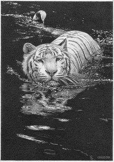 Animal Pencil Drawing 11