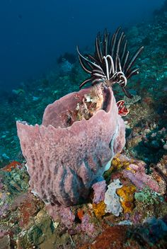 Underwater photographer Mark Strickland takes you eastbound in Indonesia; an adventure aboard Dive Damai.