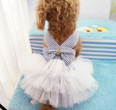 Cheap summer dog dress, Buy Quality dog dress directly from China clothes chihuahua Suppliers: Summer Dog Dress Pet Dog Clothes for Small Dog Wedding Dress Skirt Puppy Clothing Spring Pet Clothes Chihuahua Yorkie Yorkie, Girl Dog Clothes, Cheap Dog Clothes, Small Dog Clothes, Dog Wedding Dress, Cat Wedding, Puppy Costume, Dog Costumes, Dog Tutu