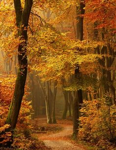 Colors of Autumn Leaves     ........................................................ Please save this pin... ........................................................... Because for real estate investing... Click on this link now!  http://www.OwnItLand.com
