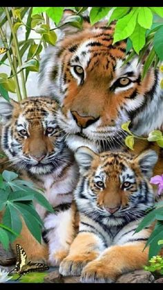 Tiger Pictures, Animal Pictures, Funny Pictures, Nature Animals, Animals And Pets, Wild Animals, Colorful Animals, Beautiful Cats, Animals Beautiful