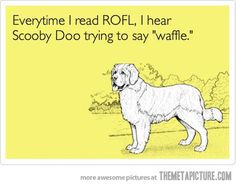 funny dog ROFL Scooby Doo waffle on imgfave