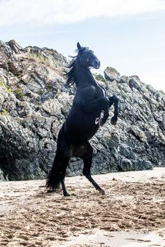 Pretty Horses, Horse Love, Beautiful Horses, Baby Horses, Wild Horses, Animals Images, Cute Animals, Free Rein Tv Show, Horse Background
