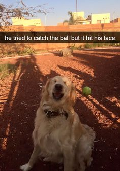 Funny Animal Memes Of The Day – 52 Pics - Lovely Animals World 32 Funny Animals Guaranteed to Make You Laugh This dog got tricked LOL 24 Funny Animal Pictures Of The Da. Funny Animal Jokes, Funny Dog Memes, Cute Funny Animals, Funny Animal Pictures, Funny Cute, Animal Pics, Top Funny, Pics Of Dogs, Memes Humor