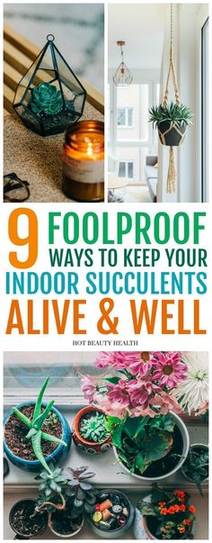 9 Ways To Care For Indoor Succulents. These Beautiful Houseplants Make Great Home Decor But Can Sometimes Be Hard To Grow. Figure out How I Avoid Killing My Succulents And Kept Them Green In The Spring, Winter Or Any Season Hot Beauty Health Crassula Succulent, Succulent Care, Planting Succulents, Indoor Succulents, Succulents Diy, Succulent Planters, Hanging Planters, Cactus Plants, Indoor Succulent Garden
