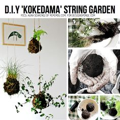 "Check out the awesome tutorial on how to make a hanging ""Kokedama string garden"", by talented Aura Scaringi of Mimimou for DesignSponge – DIY TUTORIAL HERE"