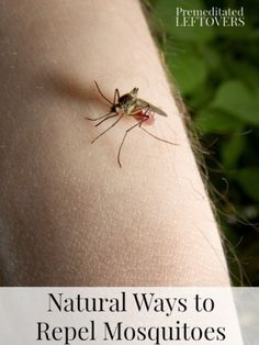 Natural Homemade Mosquito Repellents - Natural ways to repel mosquitoes by using natural ingredients like lavender vanilla extract to re. Mosquito Control, Pest Control, Bug Control, Home Remedies For Mosquito, Natural Mosquito Repellant, Bug Off, Insect Repellent, Natural Health, Natural Skin