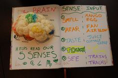 Use a cauliflower brain and some food color markers to map out which parts of the brain are responsible for our different senses. Human Body Science, Human Body Unit, Human Body Systems, Brain Science, Brain Stem, Teaching Science, Science Education, Physical Education, Senses Activities