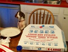 Little dachshund, should you really be up on a chair trying to steal pizza?