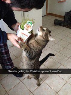Christmas present for kitty