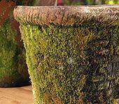 moss creeping over an old concrete or stone garden pot