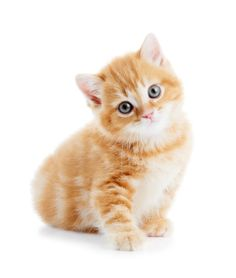 Top Kitten Names of 2012: Did Your Cat Make The Cut?