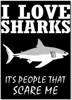 This fits me to a T! How I love sharks! Misunderstood Shark, Save The Sharks, Shark Facts, Great White Shark, Marine Biology, Ocean Creatures, Baby Shark, Cthulhu, Ocean Life