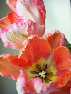 ~~Parrot Tulips by Choconancy1~~