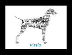 Traits of the Vizsla The Vizsla's forebears may have included breeds that the Magyars collected as they swarmed across Europe before settling in Hungary over 1,000 years ago. The Hungarian plains were
