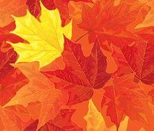 векторная графика, природа , nature, фон, осенние, autumn, листья, maple, fall, leaves