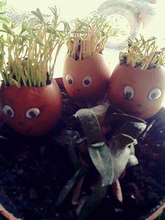 Uova con germogli di lenticchie
