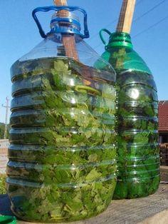 ECO-RECICLAJE: Haz tu propio fertilizante y pesticida natural