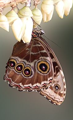 Morpho by simont34731