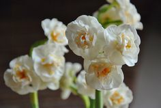The Flowers Market: Narcissus Bridal Crown