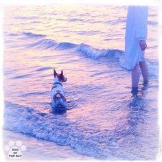 DOG OF THE DAY   Jul.06,2012 @kawatoshiki