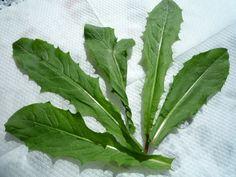 Voikukka-perunasalaatti Plant Leaves, Baking, Eat, Garden, Plants, Food, Vegetable Garden, Garten, Bakken