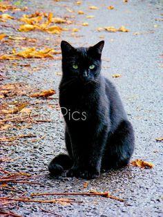 Autumn Black Cat Black Cats Everywhere