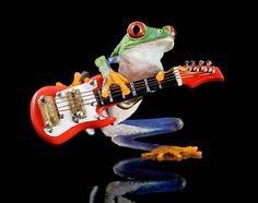 Electric Guitar Frog  Mini Fender Guitar Art by FrogFun on Etsy, $25.00