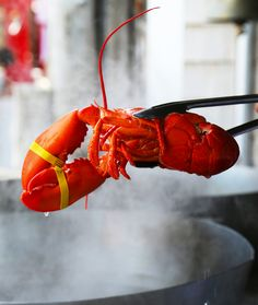 Here is everything you need to know about cooking live lobster, plus how to crack them open properly to make sure you don't miss a single morsel of meat: http://gustotv.com/cooking-2/2014/06/03/cook-eat-lobster/