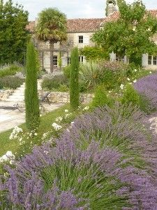 Condom, France - Swimming Pool bordered by beds of lavender