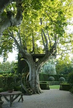Royal staircase to a tree castle. Of course.