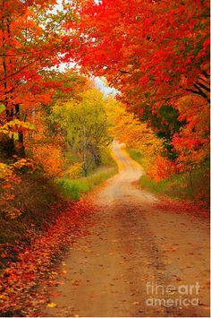 Autumn Cameo Photograph