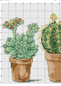 Cactuses 3
