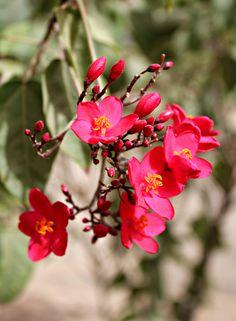flower in jedda