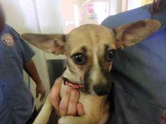 8/30SUGAR - URGENT - CITY OF LOS ANGELES SOUTH LA ANIMAL SHELTER in Los Angeles, CA…