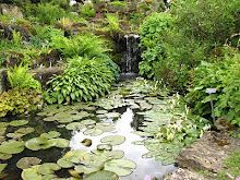 What is it with water and water-lilies?