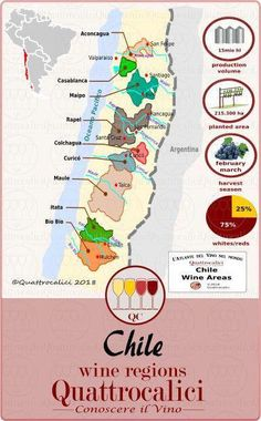 Food infographic Il Cile - Conoscere il Vino Infographic Description All about Chile and its wines on Quattrocalici. Casablanca, Margaret River Wineries, Chilean Wine, Riesling Wine, Wine Coolers Drinks, Sangria Wine, Drink Wine, Sweet White Wine, Sonoma Wineries