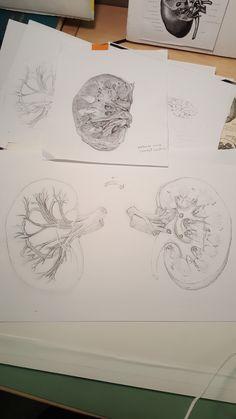 Scientific Illustration | liyaoart:   New watercolor project, Kidney!