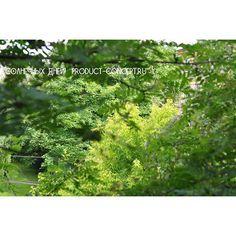 Концепция Продукта. Качественные продукты.: #мысвами#люблю#лес#настроение#мир#удивительноерядо...