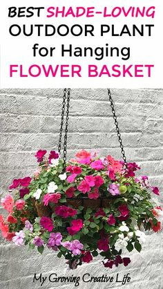 hanging planting Outdoor - Shade-Loving Outdoor Plant For A Flower Hanging Basket - My Growing Creative Life Hanging Plants Outdoor, Plants For Hanging Baskets, Hanging Flower Baskets, Outdoor Shade, Outdoor Flowers, Hanging Gardens, Plants Indoor, Diy Hanging, Shade Plants Container