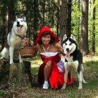 Фото хаски в Лесной Сказке