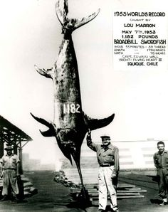 Never give up on a line. Let some of these huge catches inspire you to pull one in yourself! Check out the 12 biggest fish ever caught (approved by IGFA All-Tackle World Records)! #BoatUS