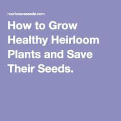How to Grow Healthy Heirloom Plants and Save Their Seeds.