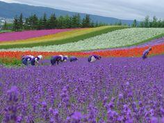 Nmeraviglia della natura..atura, Giappone