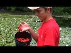 Ty Ty mayhaw trees will thrive and produce buckets of red mayhaws when planted in your garden. Ty Tys mayhaw jelly, the worlds best flavor jelly. www.tytyga.com