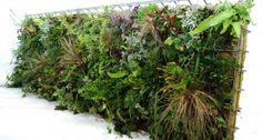 Framepanel - Begrünungssysteme für Schallschutzwände und Gartenzäune - Sempergreen