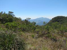 Fisionomia: Floresta Ombrófila Mista/Campos de Altitude (entre 1000 e 1800m). Local: Nova Friburgo/RJ.