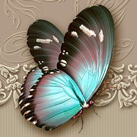 Moonbeams Flutter:The Butterfly Collection 3D Models moonbeam1212