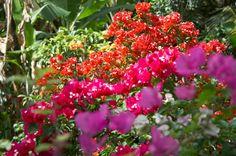 Insecticide naturel pour les plantes